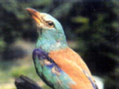 Sassuolo, Collezione Ornitologica Andrea Fiori