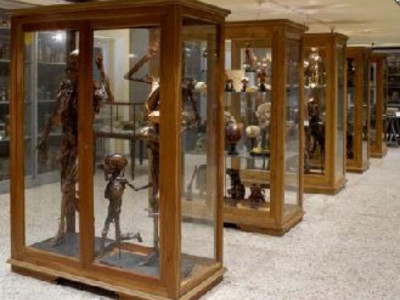 Pisa, MUSEO DI ANATOMIA UMANA DEL DIPARTIMENTO DI MORFOLOGIA UMANA E BIOLOGIA APPLICATA