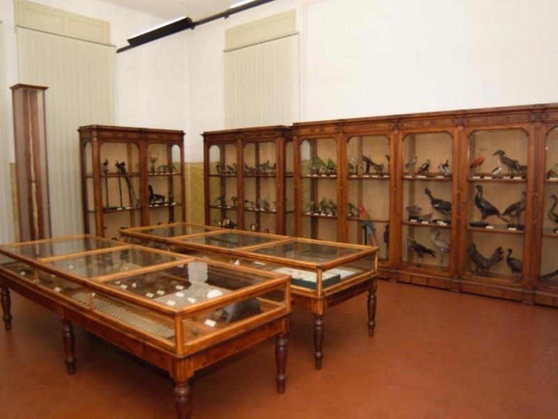 Cremona, Museo Civico di Storia Naturale