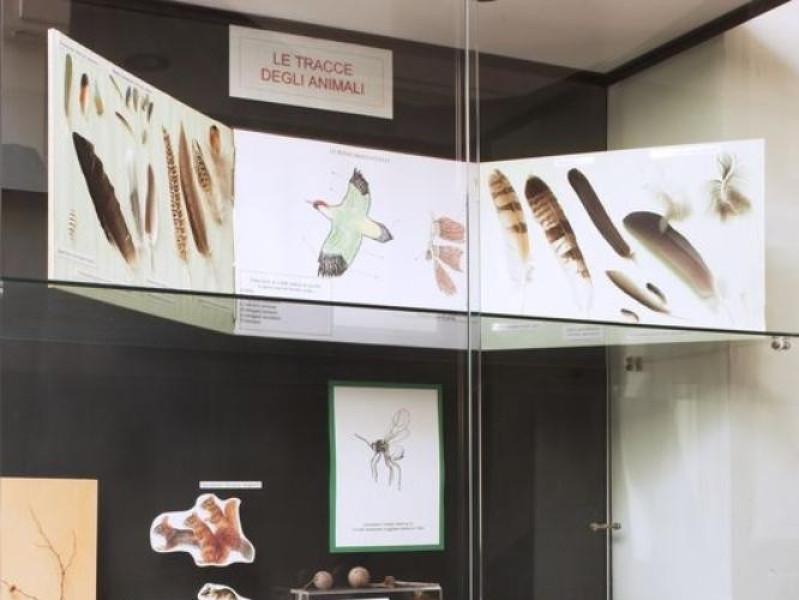 Salsomaggiore Terme, Museo Naturalistico del Parco dello Stirone
