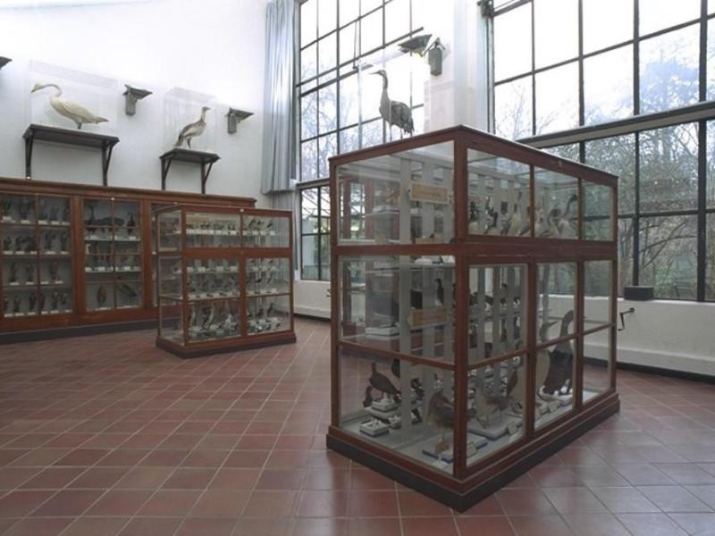 Parma, Museo di Storia Naturale