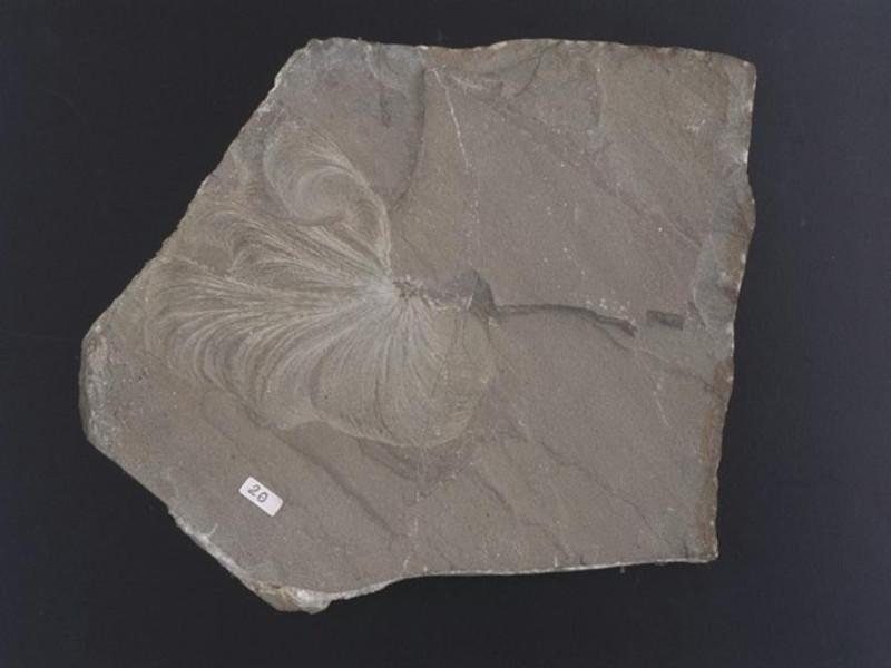 Parma, Museo Paleontologico Parmense