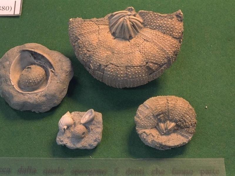 Salsomaggiore Terme, Il Mare Antico - Museo Paleontologico