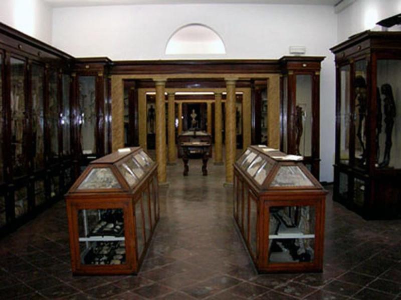 Modena, Museo di Anatomia