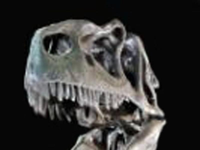 Modena, Museo Universitario di Paleontologia