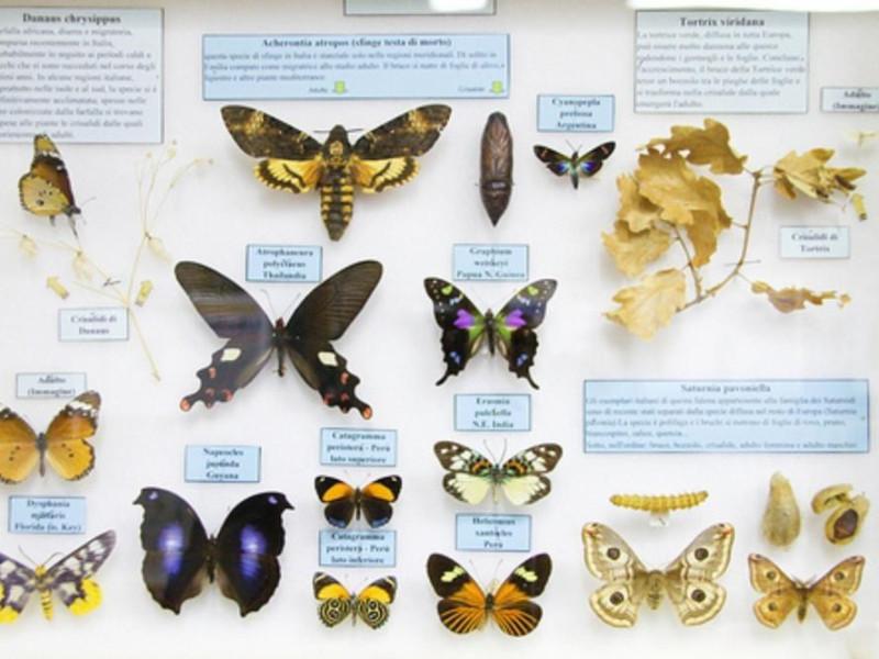 Modena, Museo Universitario di Zoologia e Anatomia Comparata