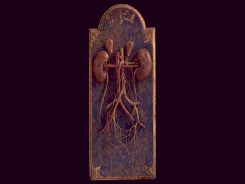 """Bologna, Museo delle Cere Anatomiche """"L. Cattaneo"""""""
