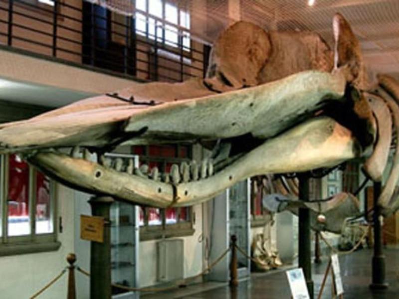 "Bologna, Museo di Anatomia Comparata ""E. Giacomini"""