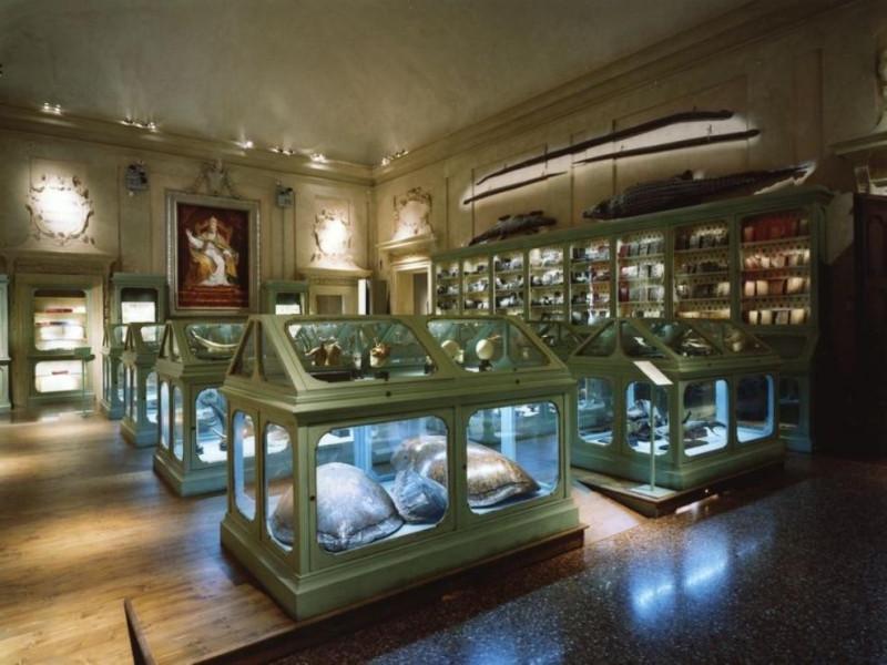 Bologna, Museo di Palazzo Poggi