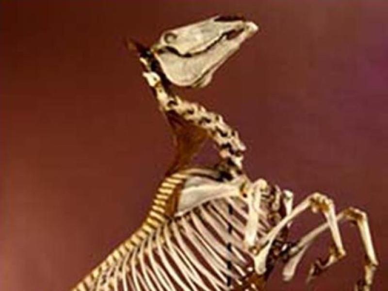 Ozzano dell'Emilia, Museo di Anatomia degli Animali Domestici