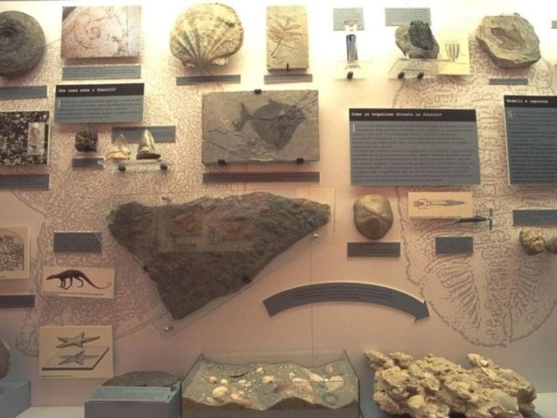 Ferrara, Museo Civico di Storia Naturale