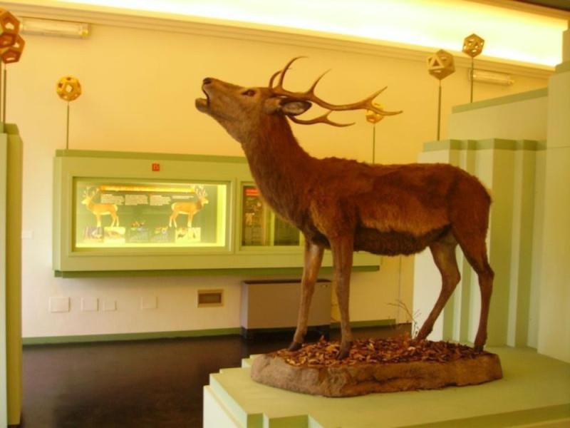 Mesola, Museo del Bosco e del Cervo della Mesola