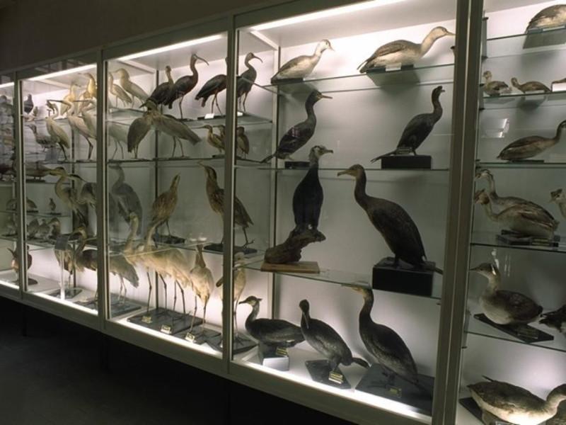 """Forli', Museo Ornitologico """"F. Foschi"""""""