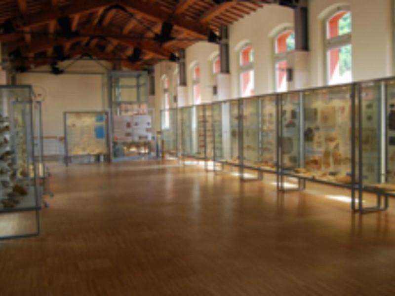 Museo dei funghi e dei fossili