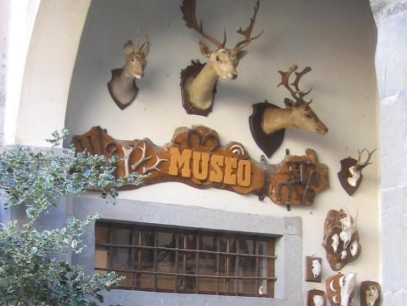 """Stia, MUSEO DEL BOSCO E DELLA MONTAGNA - COLLEZIONE ORNITOLOGICA """"C. BENI"""""""