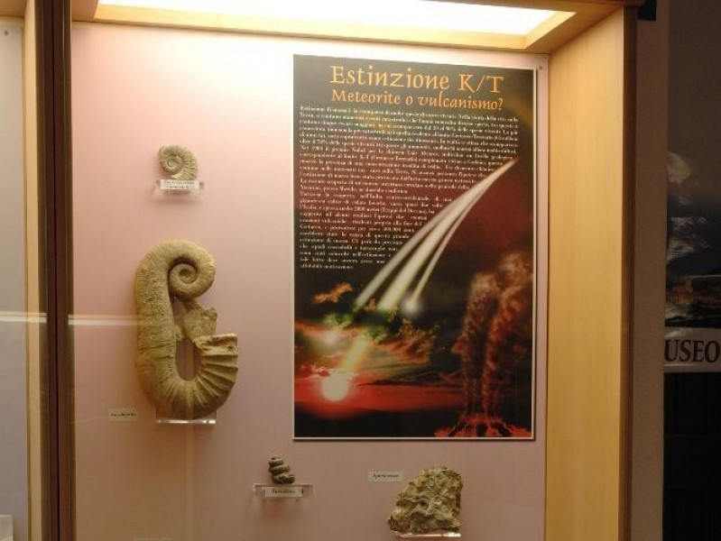 Laboratorio ecologico di Geo-paleontologia. E Fedeli, Marcello; jpg; 1417 pixels; 2126 pixels