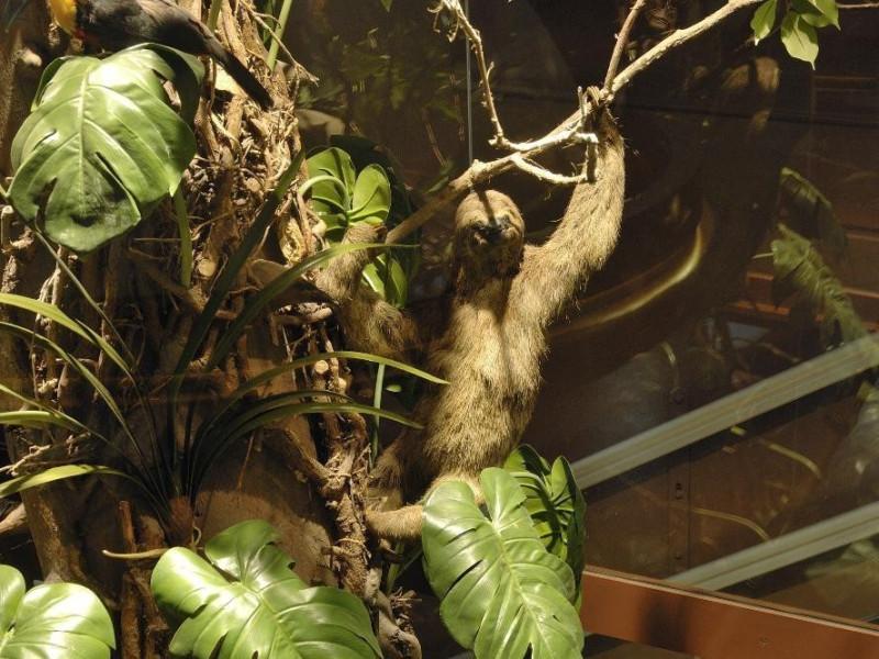 Sala espositiva. Specie arboree Fedeli, Marcello; jpg; 2126 pixels; 1417 pixels
