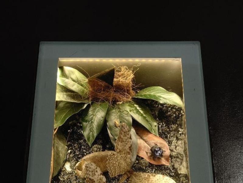 Sala espositiva. Specie arboree Fedeli, Marcello; jpg; 1417 pixels; 2126 pixels