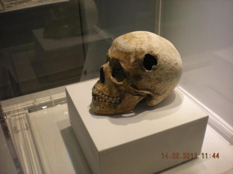 Studi anatomici di Baronio Vincenzi Bovini, Mirko; jpg; 1024 pixels; 768 pixels