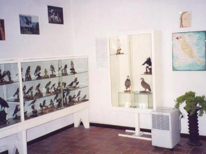 "Museo ornitologico - naturalistico ""S. Bambin jpg; 768 pixels; 543 pixels"