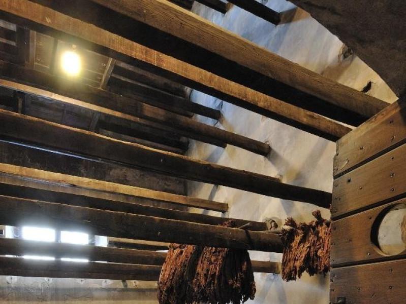 Museo storico e scientifico del Tabacco. Essi Fedeli, Marcello; jpg; 1417 pixels; 2126 pixels