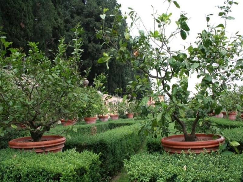 Villa Fidelia. Giardino all'italiana, partico Parco Tecnologico 3A-Progetto Ville e Giardini Regione Umbria; jpg; 768 pixels; 512 pixels