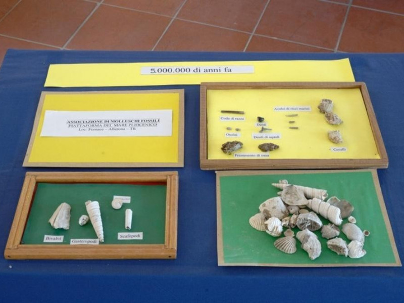 Interno. Molluschi fossili. Fedeli, Marcello; jpg; 768 pixels; 511 pixels