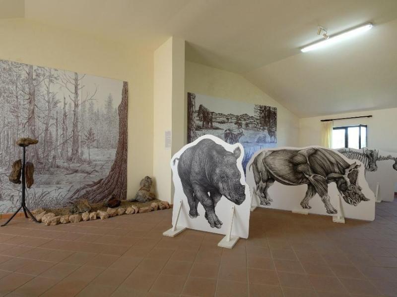 Sala espositiva. Collezione paleontologica Fedeli, Marcello; jpg; 2126 pixels; 1417 pixels