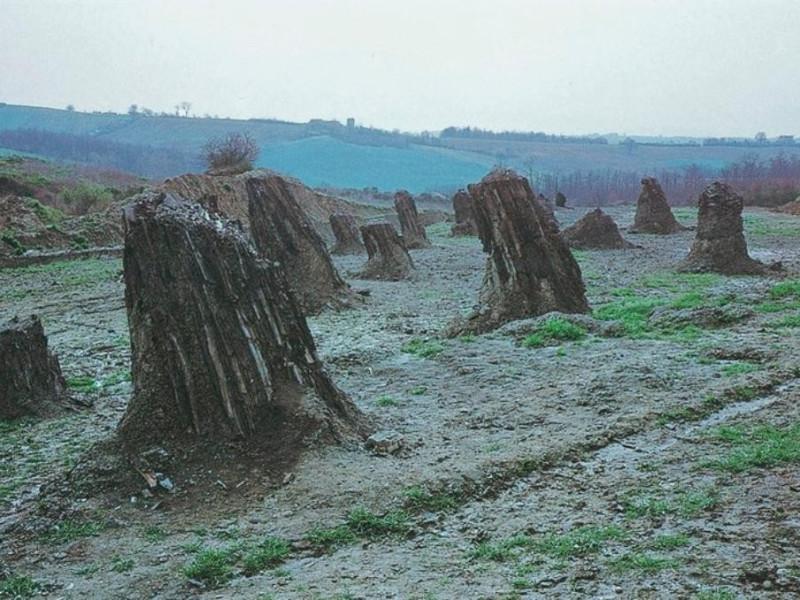 Foresta Fossile di Dunarobba, tronchi jpg; 768 pixels; 521 pixels