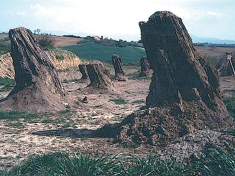Foresta Fossile di Dunarobba, tronchi jpg; 768 pixels; 522 pixels