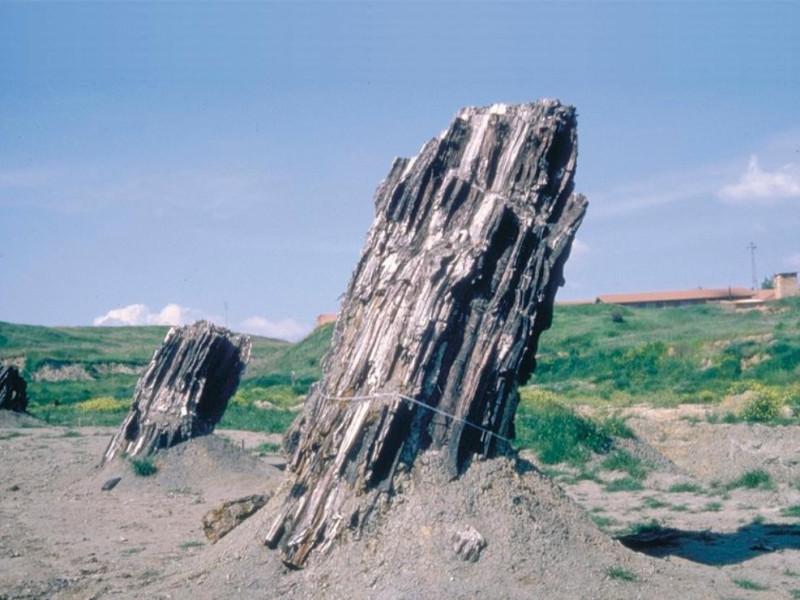 Foresta Fossile di Dunarobba, tronchi jpg; 768 pixels; 569 pixels