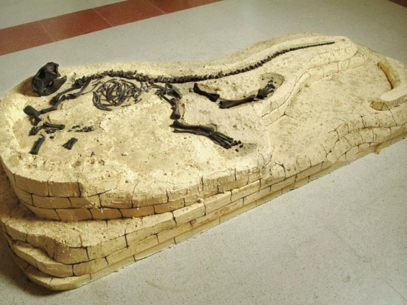 Psittacosauro jpg; 768 pixels; 512 pixels
