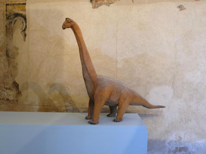 Mostra permanente di paleontologia. Modellino Fedeli, Marcello; jpg; 2126 pixels; 1417 pixels