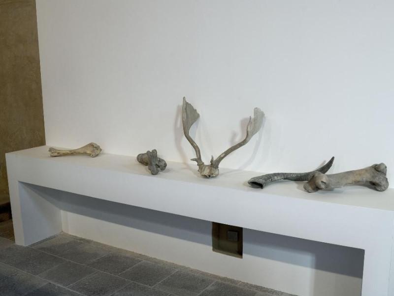 Mostra permanente di paleontologia. Ossa di a Fedeli, Marcello; jpg; 2126 pixels; 1417 pixels