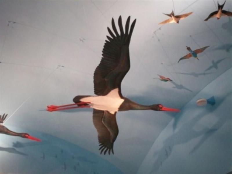 Museo della migrazione e Osservatorio ornitol