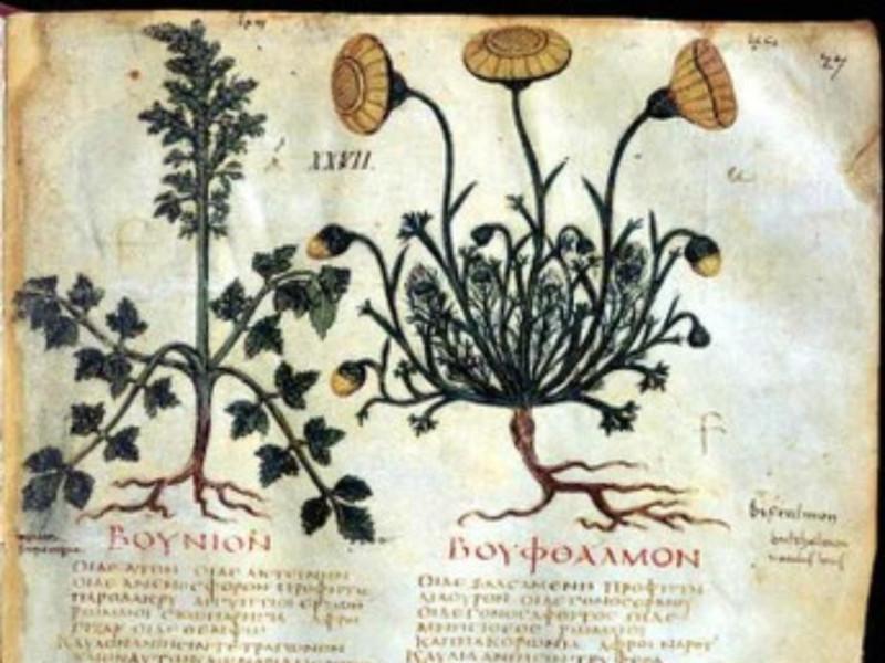 Codice - Dioscoride neapolitanus
