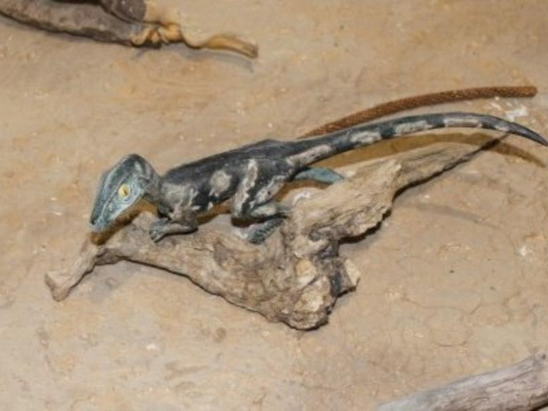 Museo paleontologico  di Magliano Vetere