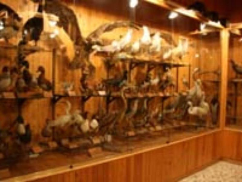 Monte Sant'Angelo, Museo Naturalistico della Foresta Umbra