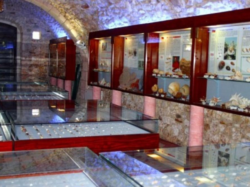 Vieste, Museo Malacologico di Vieste