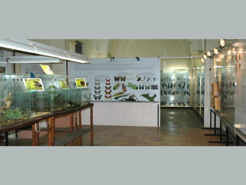 Calimera, Museo di Storia Naturale del Salento