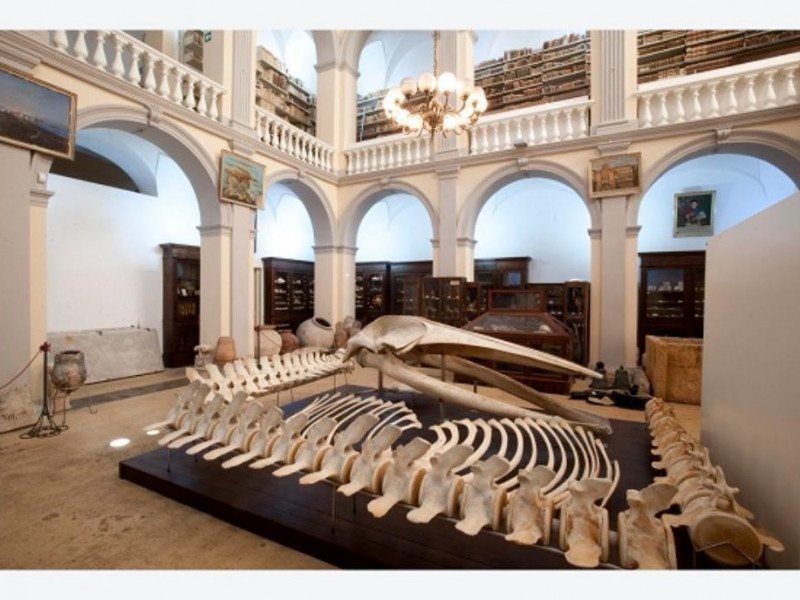 "Gallipoli, Museo Civico ""Emanuele Barba"""