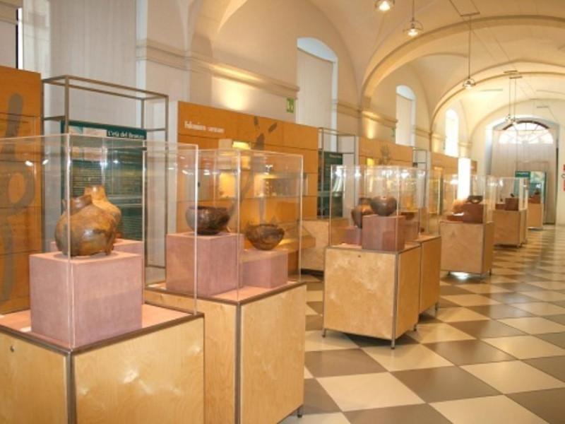 """Maglie, Museo Civico di Paleontologia e Paletnologia """"Decio de Lorentiis"""""""