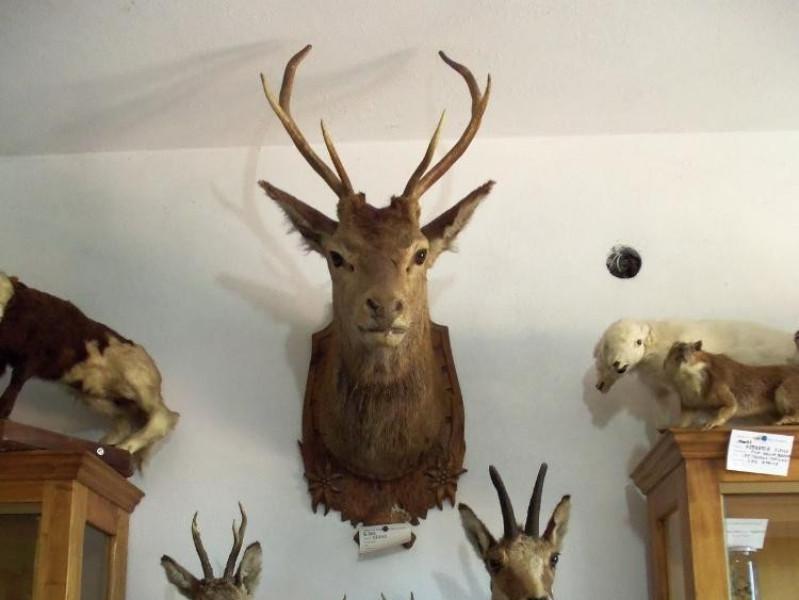 MUSEO DI SCIENZE NATURALI BELVI'