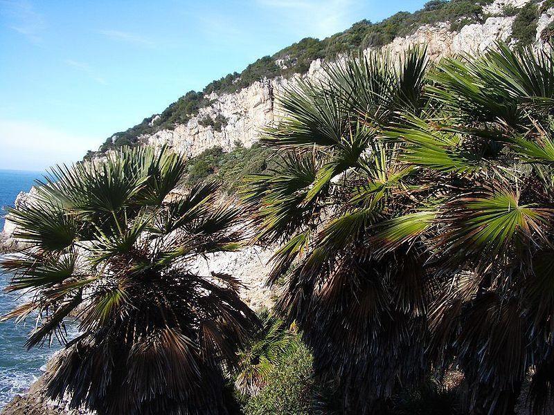 Zona Quarto Caldo, palme nere