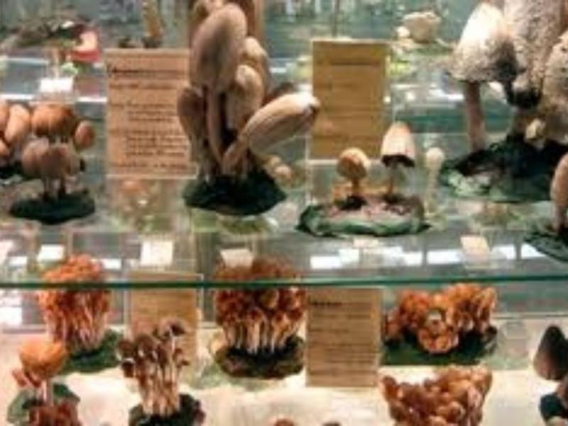 Museo_del_fungo