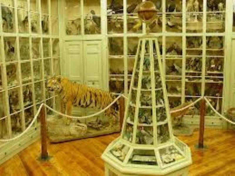 Museo_Craveri