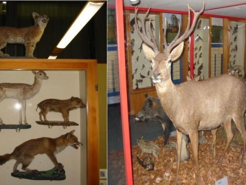 Jerago con Orago, Civico Museo di Storia Naturale